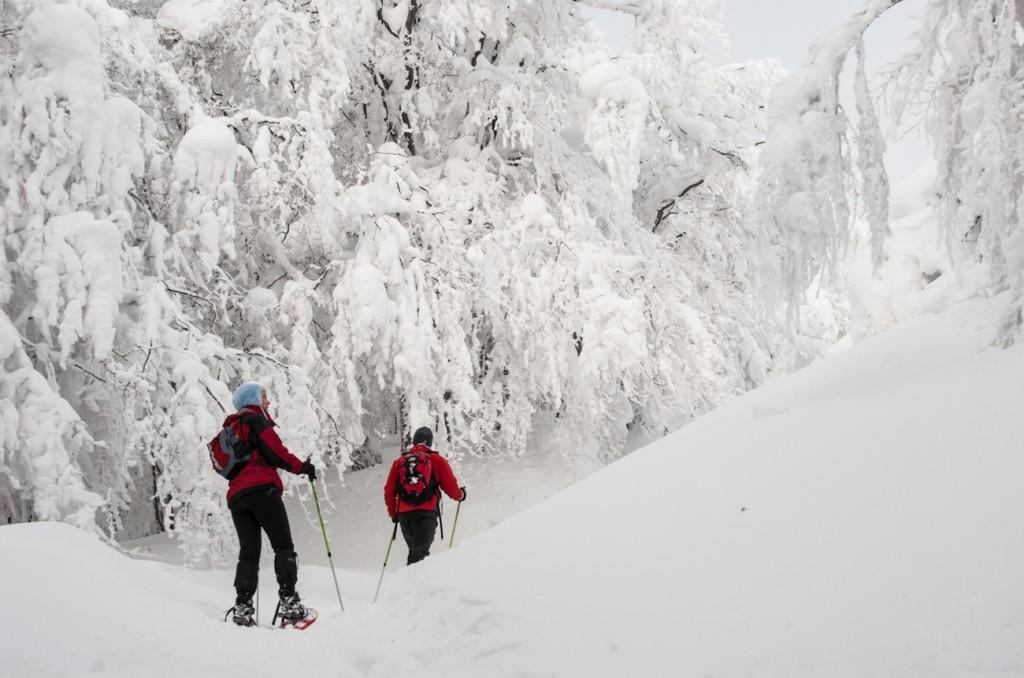 Rakiety śnieżne Bieszczady
